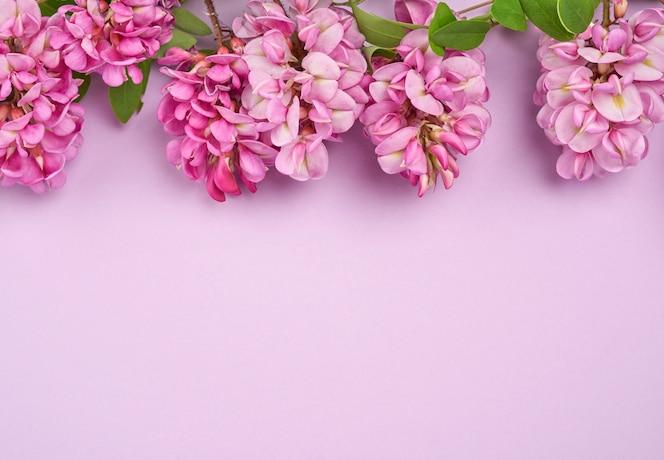 Bloeiende tak robinia neomexicana met roze bloemen op een paarse achtergrond