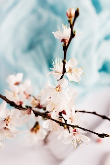 Bloeiende tak van wilde de lentebloemen van de abrikozenboom in vaas