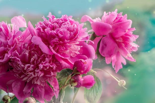Bloeiende takken met pioenroos bloemen en knoppen. ontspan bloemenposter of behang. wazige achtergrond