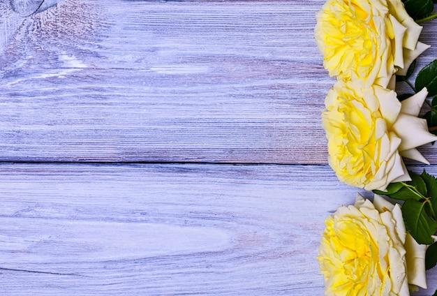 Bloeiende toppen van een gele roos
