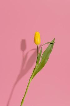 Bloeiende tulp met schaduw