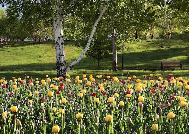 Bloeiende tulpen in het park