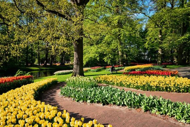 Bloeiende tulpenbloembedden in keukenhof-bloementuin, nederland