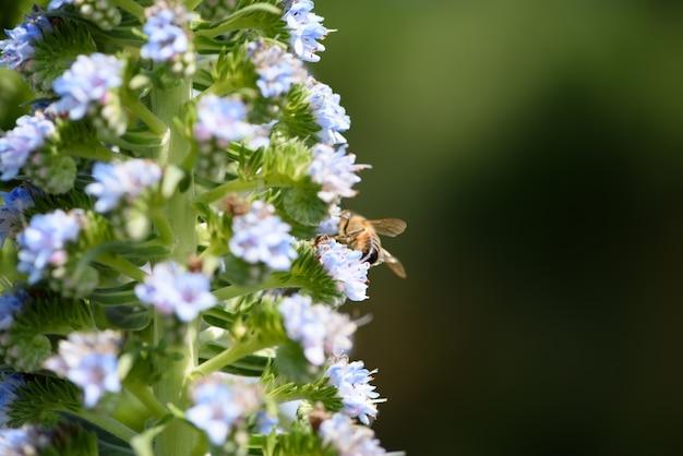 Bloeiende wilde planten en bijen