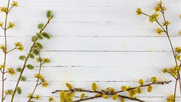 Bloeiende wilgentakjes en kornoelje op een oude witte houten oppervlak