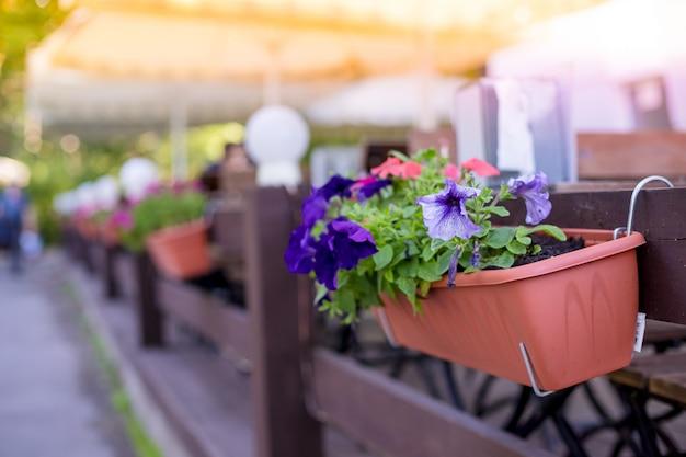 Bloeiende witte petunia in een hangende retro planter op straat. kleurrijke zomer petunia planter op stoep. hangende houten mand met prachtige bloemen, tuinstijl, tuinieren. potten van bloei