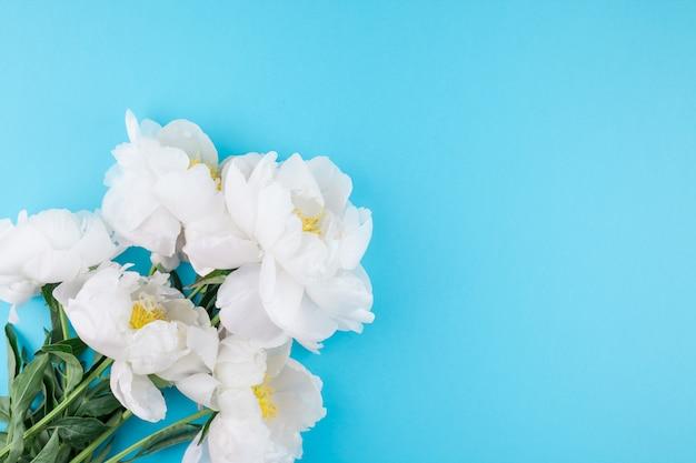 Bloeiende witte pioen bloemen