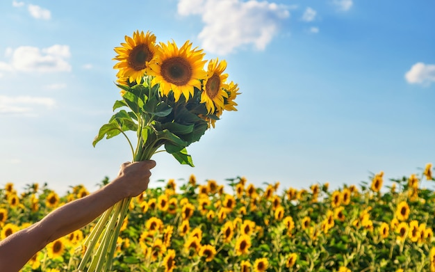 Bloeiende zonnebloemen in de handen