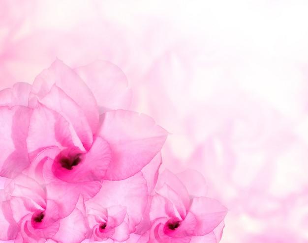 Bloem achtergrond. roze azalea bloemen