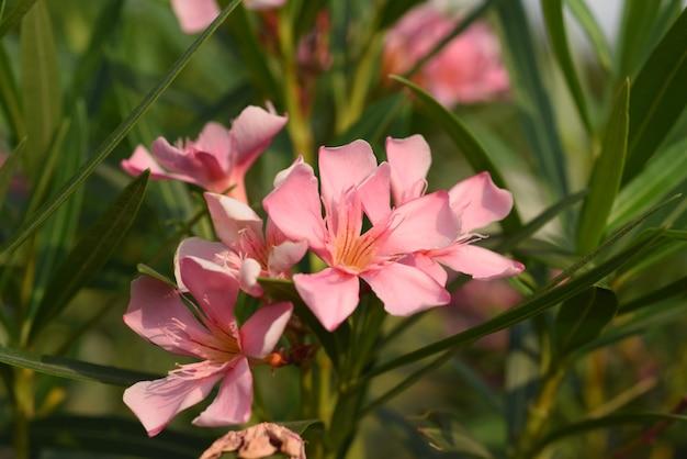 Bloem bloeien en groen blad met heldere hemel