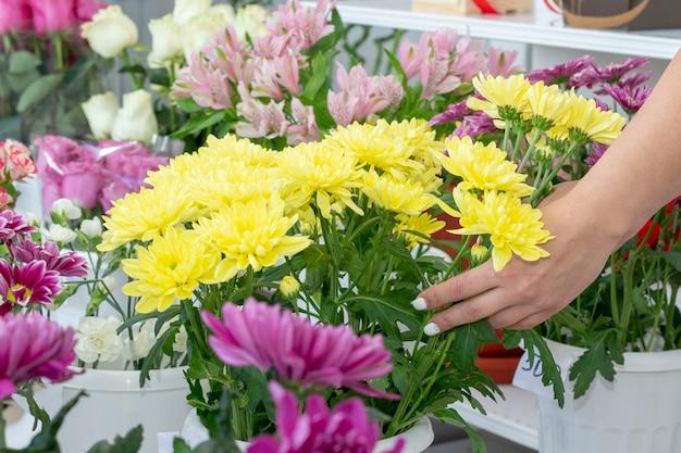 Bloem. chrysanthemum kamille bloemen achtergrond. bloemen boeket heldere bloemen chrysant achtergrond