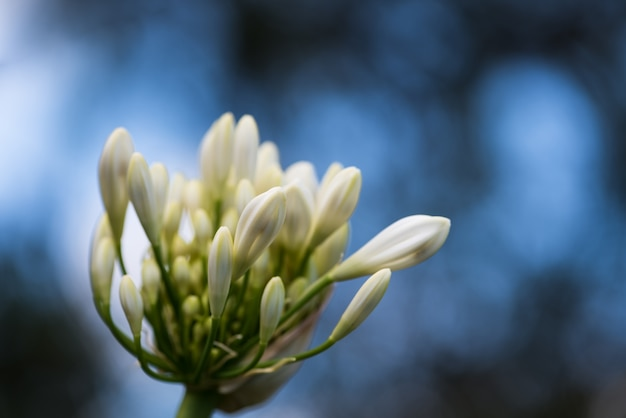Bloem close-up spring bos spring nederlands