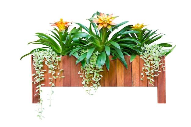 Bloem en groene plant gemengd in houten pot voor decoratie geïsoleerd op wit met uitknippad