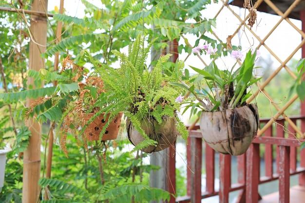 Bloem hangende installatie in de tuin van de pottendecoratie thuis.