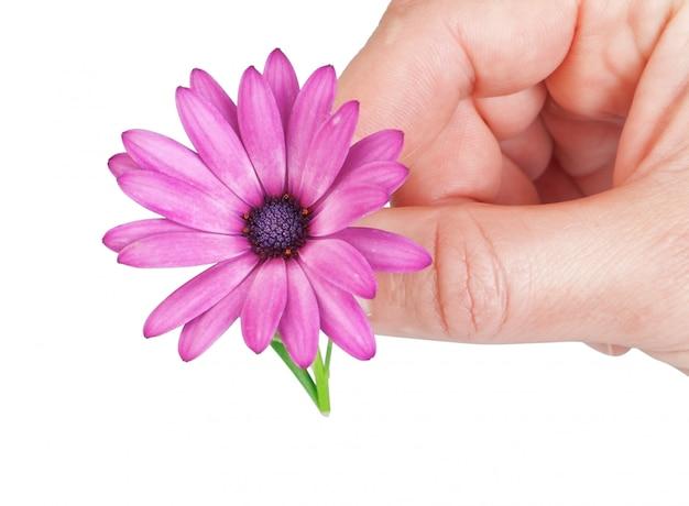 Bloem in het voorjaar cadeau, vriendin. in de hand van de man.
