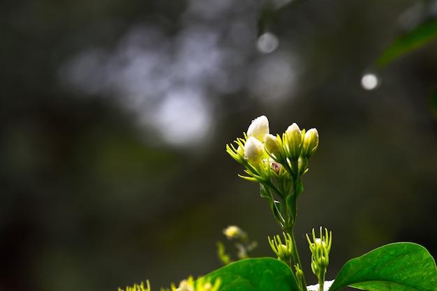 Bloem in volle bloei in de tuin op een zonnige dag