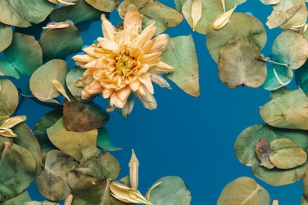Bloem met bladeren in blauw water
