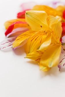 Bloem met kleurrijke bloemblaadjes.