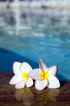Bloem op zwembad