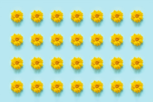 Bloem patroon. natuurlijke gele bloemen op blauwe achtergrond. sjabloon voor uw ontwerp bovenaanzicht flat lay