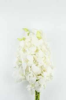 Bloem van de boeket de witte orchidee voor bidt eerbied aan boedha op witte achtergrond wordt geïsoleerd die