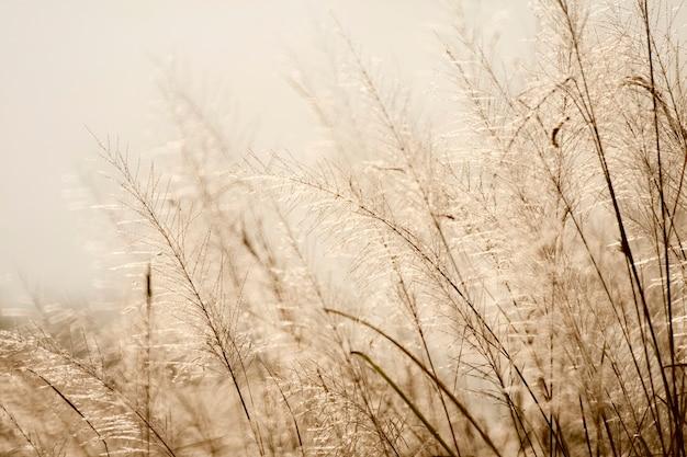 Bloem van gras in de ochtend