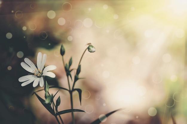 Bloem veld aan de hemel. natuur abstract