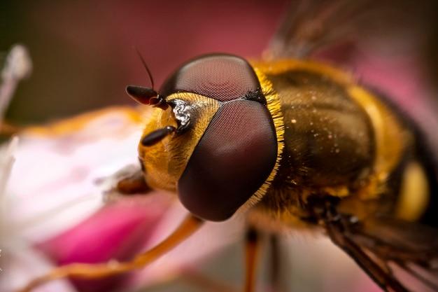 Bloem vlieg hoofd en ogen, macrofotografie