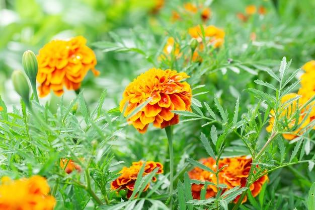 Bloemachtergrond, mooie en heldere bloem Premium Foto