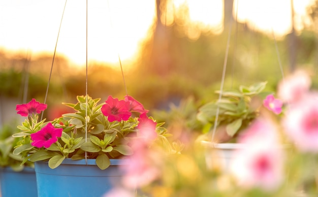 Bloembed met veelkleurige petunia's