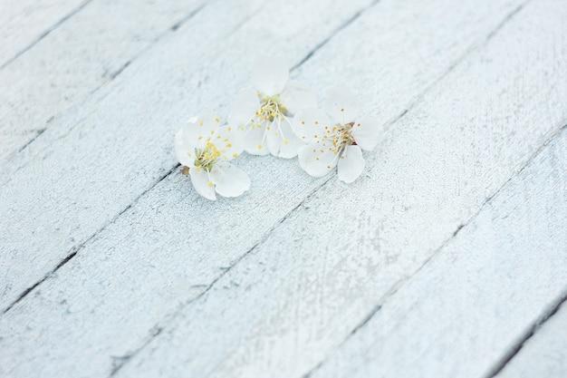 Bloemblaadjes van kersenbloemen op een lichte houten achtergrond, de lenteachtergrond
