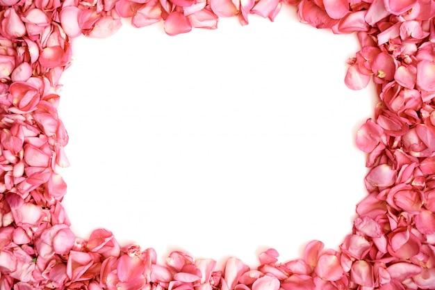 Bloemblaadjes van roze rozenframe op witte achtergrond