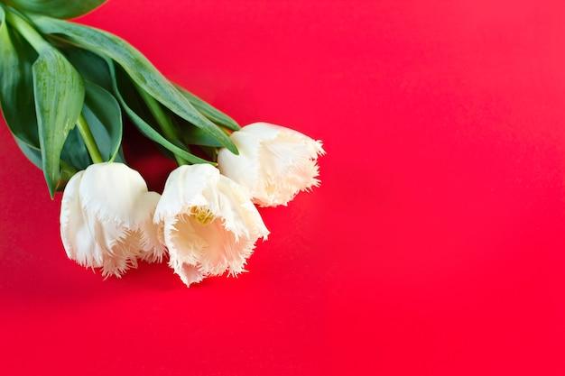 Bloemen 8 maart vrouwendag. felicitatie