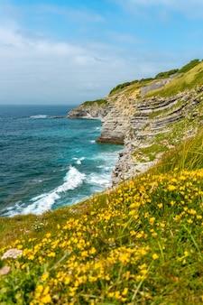 Bloemen aan de kust en de zee van het natuurpark van saint jean de luz genaamd parc de sainte barbe, col de la grun in het franse baskenland Premium Foto
