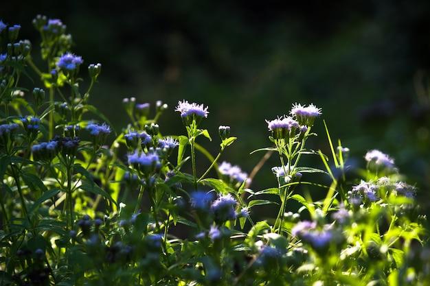 Bloemen aan de plant in volle bloei op een zonnige dag