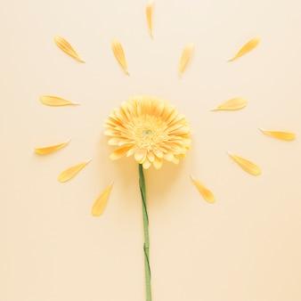 Bloemen achtergrond