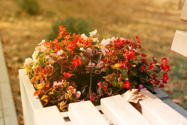 Bloemen bij een bankje in het park