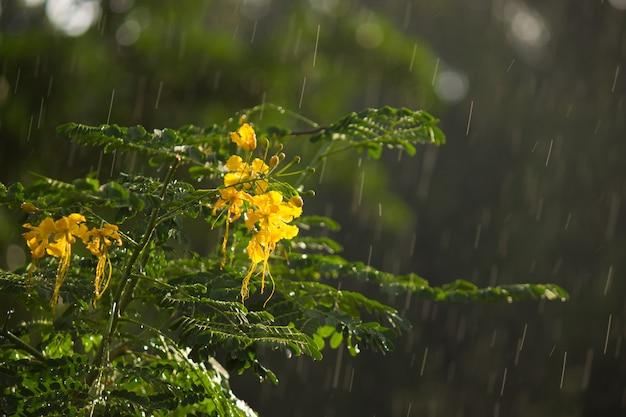 Bloemen bloeien overdag weg in natuurlijk licht