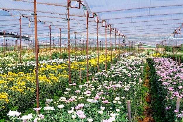 Bloemen boerderij
