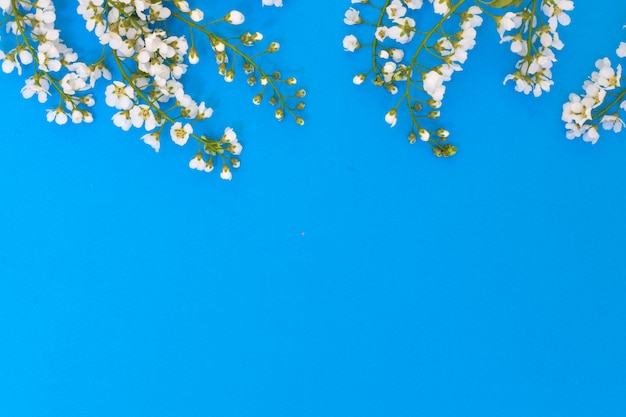 Bloemen en bladeren van gewone vogelkers op een blauwe achtergrond.