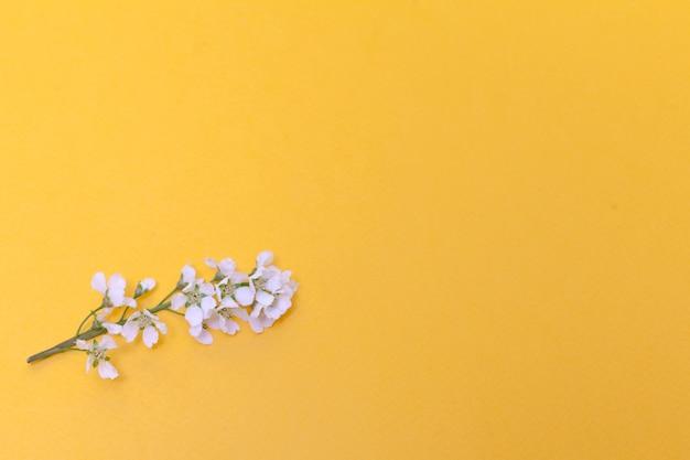 Bloemen en bladeren van gewone vogelkers op een gele achtergrond.