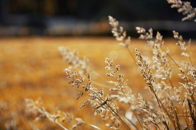 Bloemen en herfstlandschap, met oker en gouden kleuren.