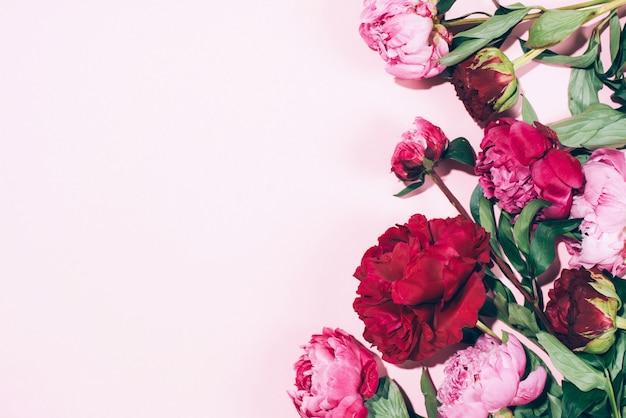 Bloemen frame. roze pioenrozen met harde schaduw op pastel achtergrond