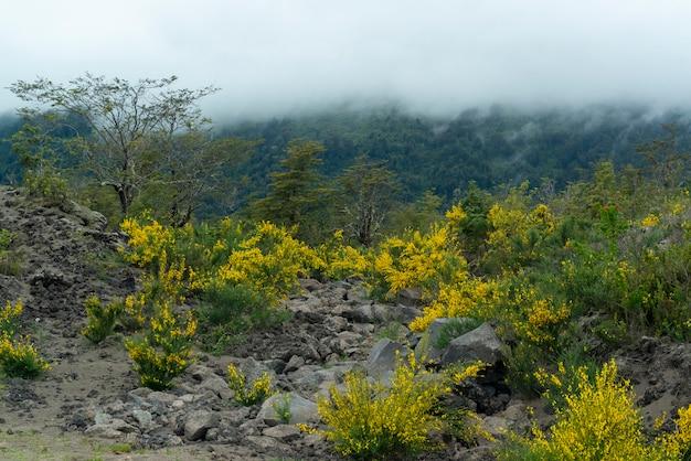 Bloemen groeien in de as van de calbuco vulkaan puerto varas llanquihue los lagos chili