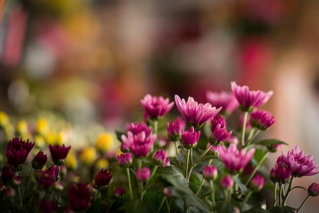 Bloemen in de bloemist winkel