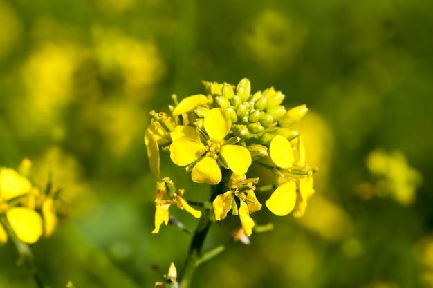 Bloemen in de lente