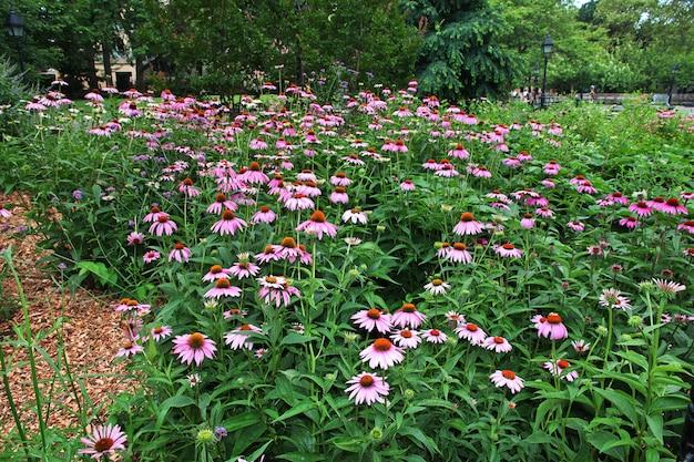 Bloemen in de stad new york