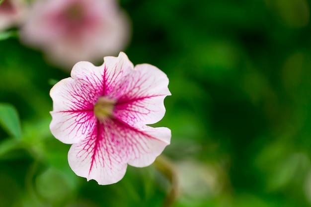 Bloemen in de tuin.