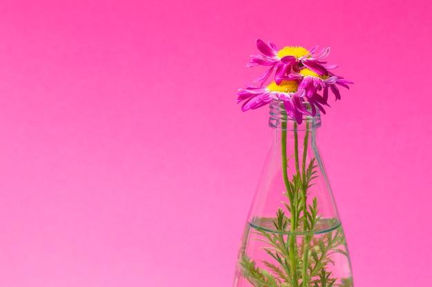 Bloemen in een glazen fles op een roze achtergrond