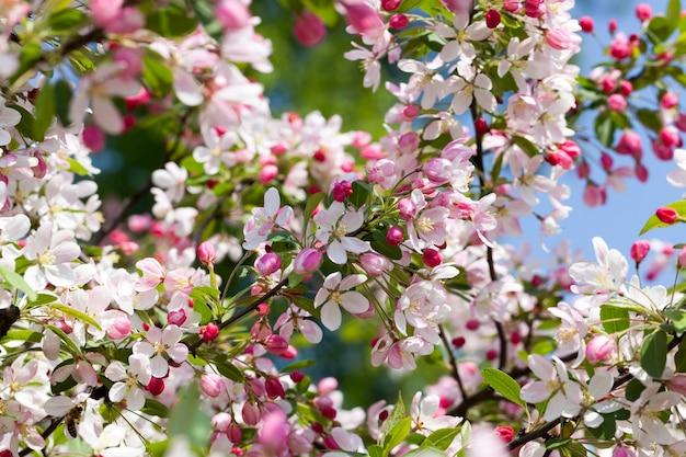 Bloemen in het lenteseizoen, bloemen worden gekweekt voor decoratie en landschapsarchitectuur van het gebied